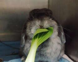 Le régime alimentaire du lapin