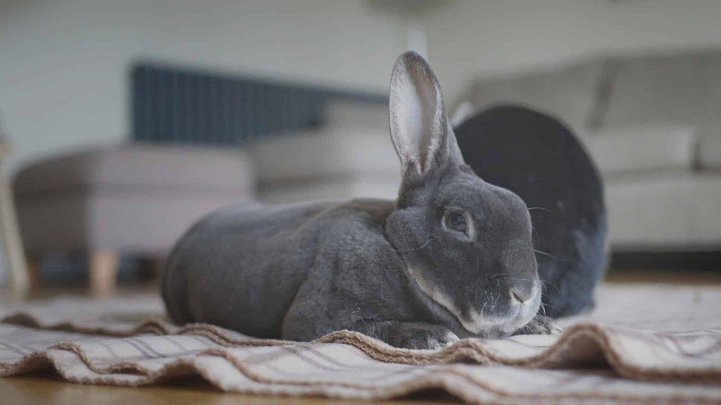 Photo d'un lapin abattu car il est malade