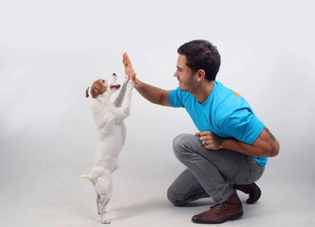 laurent touchet chien éducation