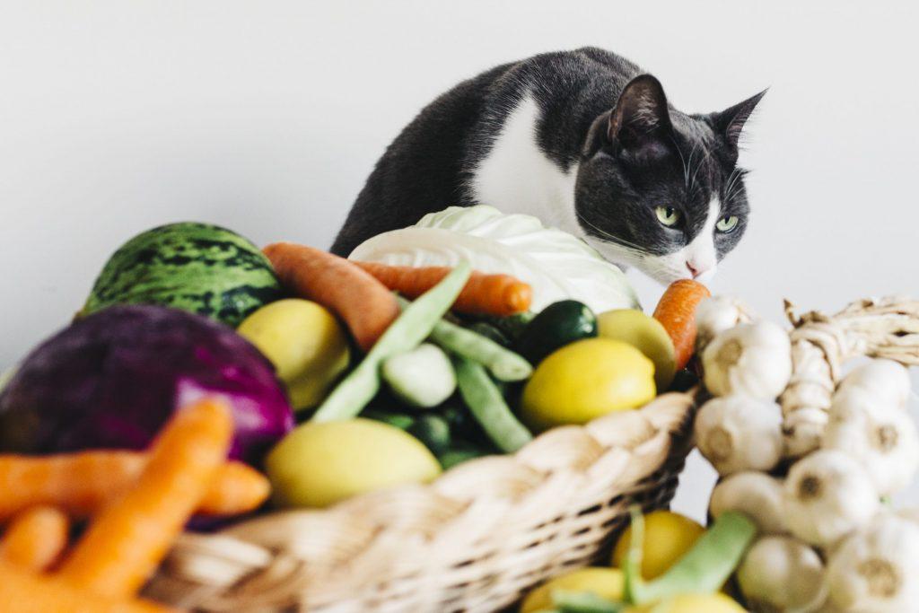Légumes du chat