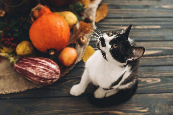 Légumes pour chat : quels légumes et quelles quantités
