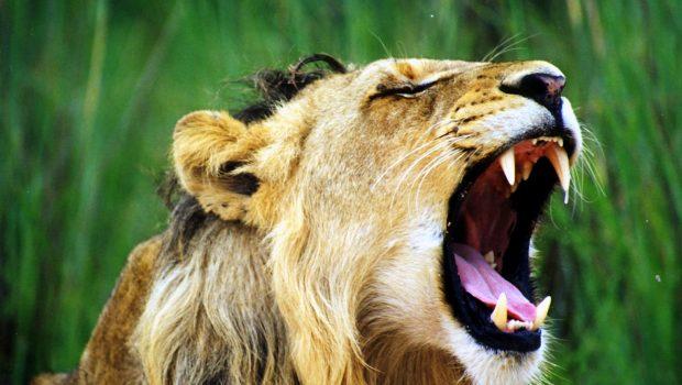 Quel animal a la morsure la plus puissante ?