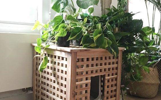 7 Idées pour cacher la litière du chat