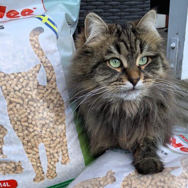 Changer le type de litière de mon chat