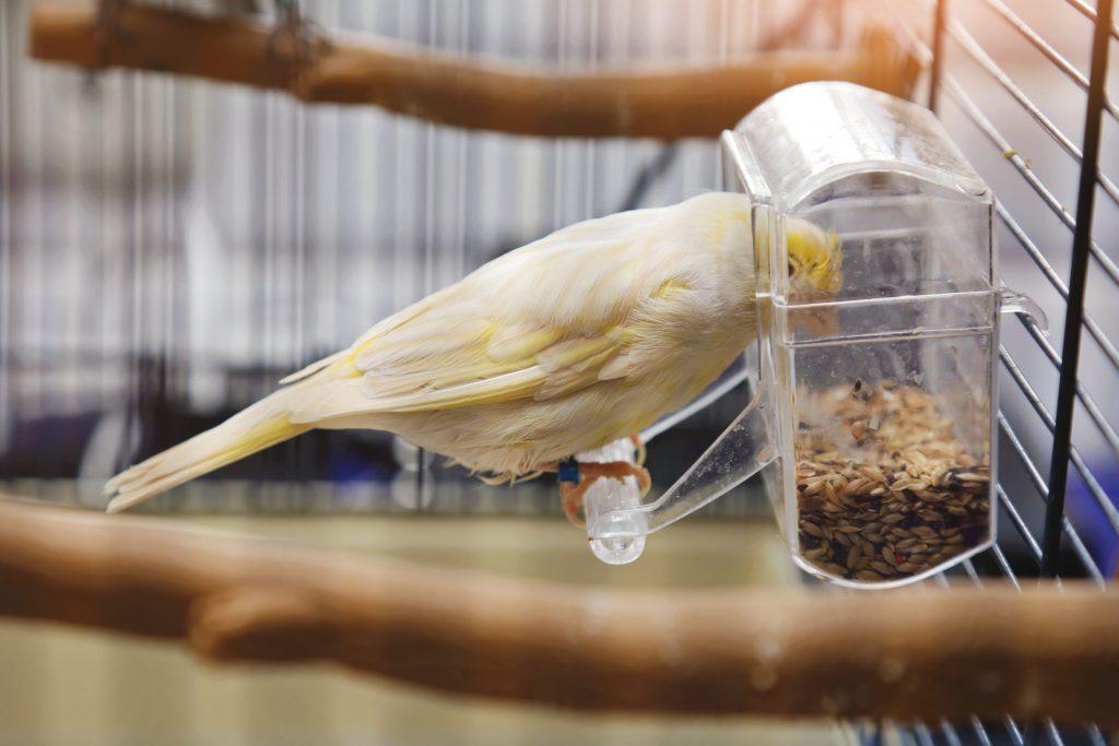 mangeoire dans la cage avec un oiseau