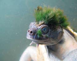 10 photos d'animaux aux coupes inattendues