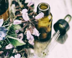 4 médecines naturelles pour la santé de son chat