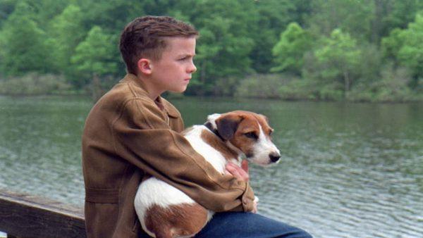 Les 12 meilleurs films avec des chiens