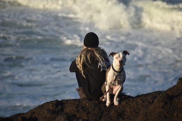 Voyager avec son chien : guide 2021