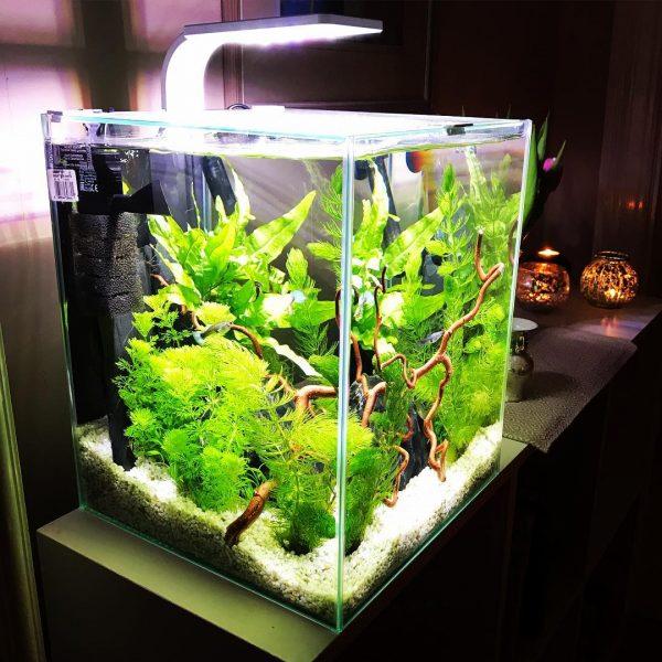 Nano aquarium : conseils & infos