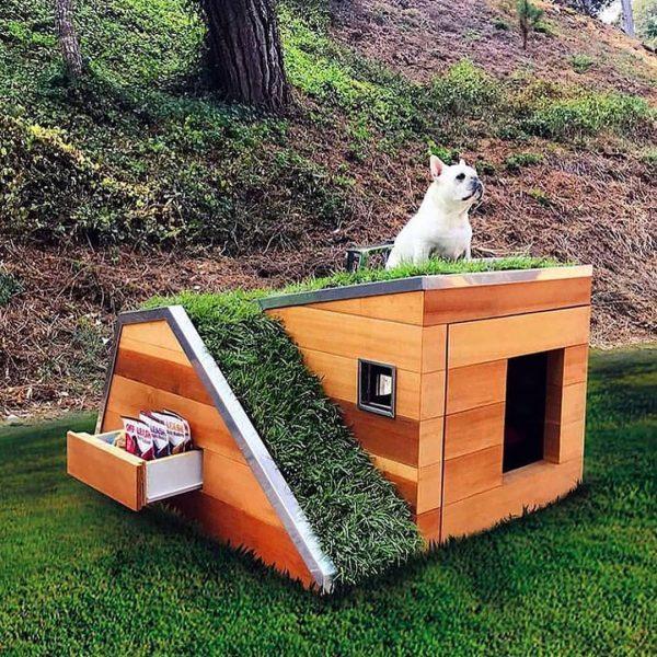 Isoler la niche de son chien : 7 conseils pour une isolation parfaite