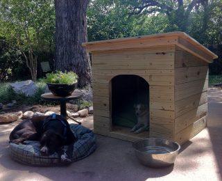 Niche pour chien : conseils & infos