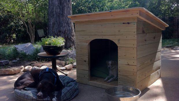 Comment choisir la niche pour son chien ?