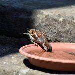 L'abreuvoir pour oiseaux : conseils & infos