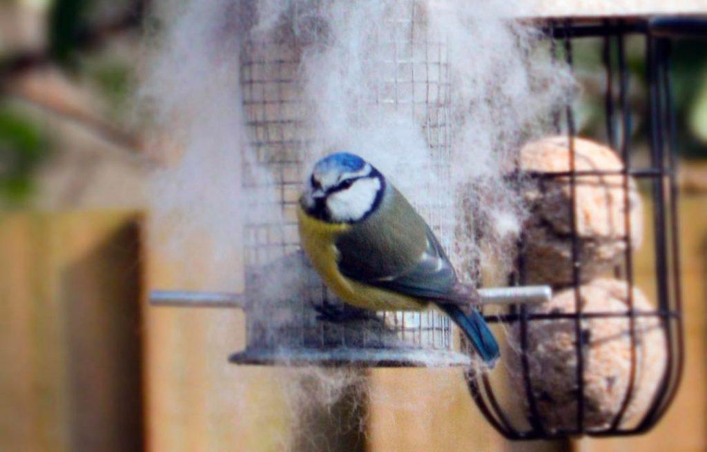 oiseaux poils