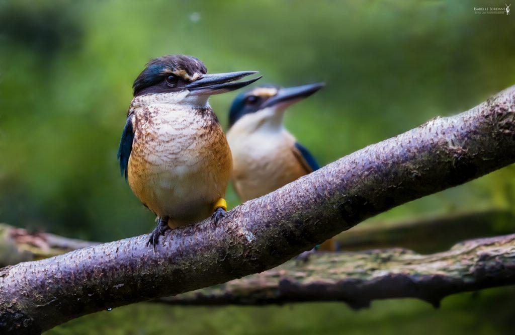 Photo d'un oiseau dans la forêt