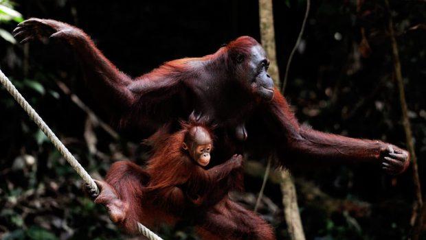 Quels animaux voir en Asie ?