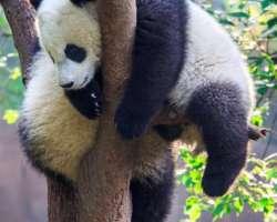 12 animaux très fainéants à connaître