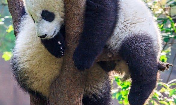 12 animaux très paresseux à connaître