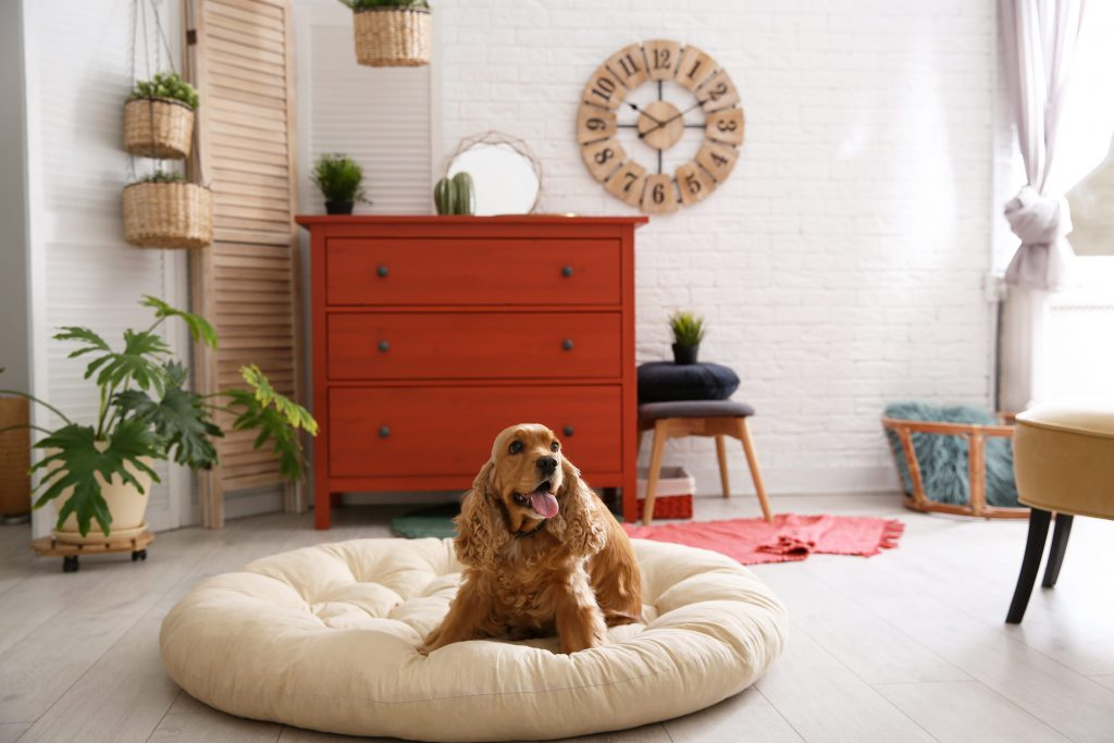 chien dans son panier du salon