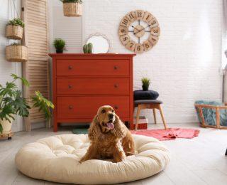 Où placer le panier du chien et combien en installer ?
