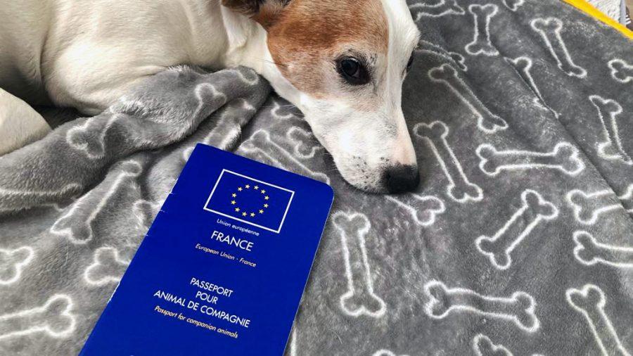 Le passeport du chien : document indispensable pour voyager