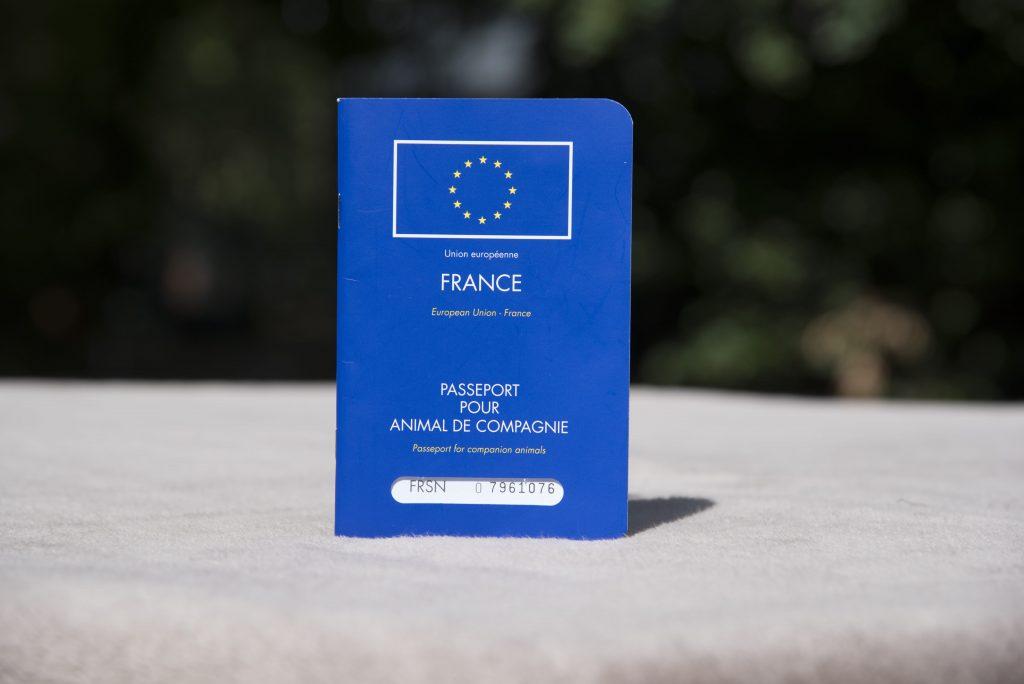 Photo du passeport européen d'un animal de compagnie