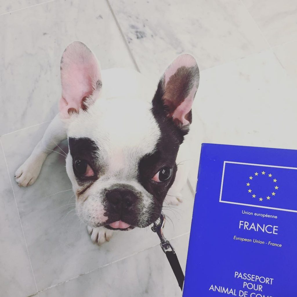 Passeport européen d'un chien