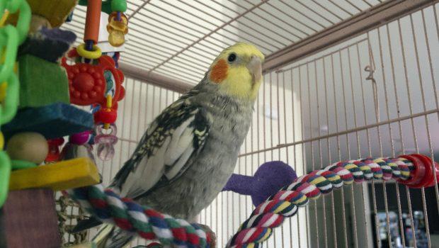 Quelle cage choisir pour son perroquet ?