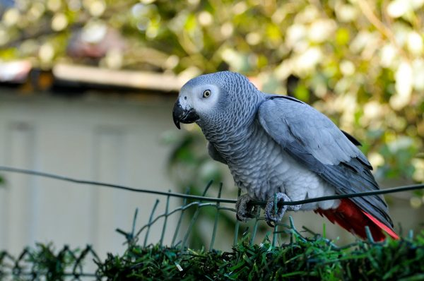 5 oiseaux très intelligents à découvrir