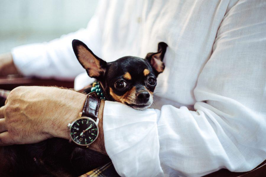 Races de chiens les plus petites : TOP 10