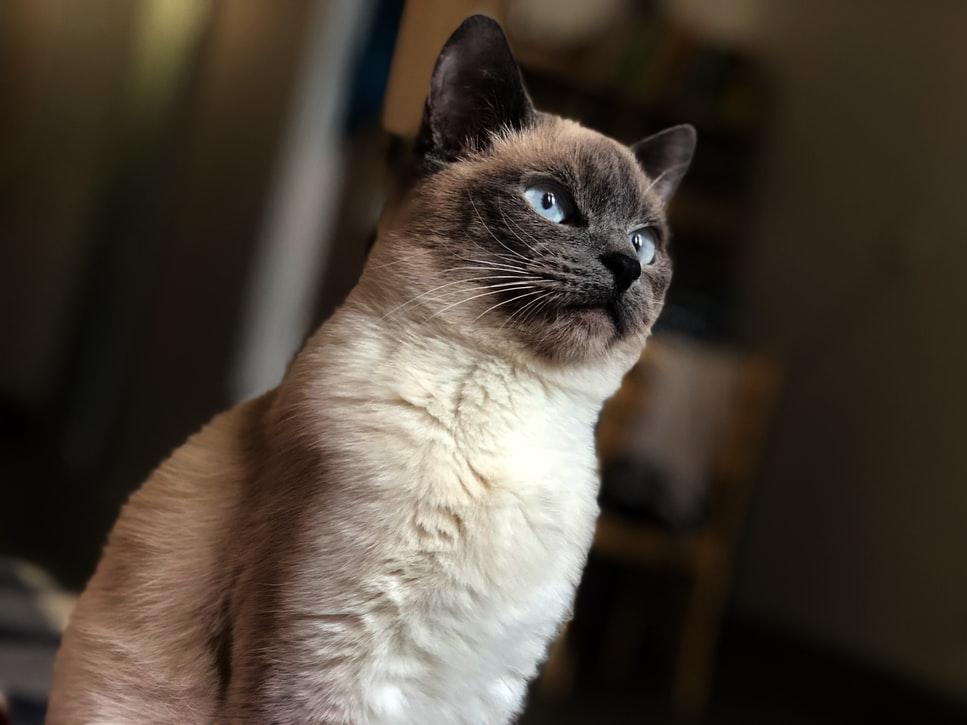 Photos d'un chat prise en diagonale