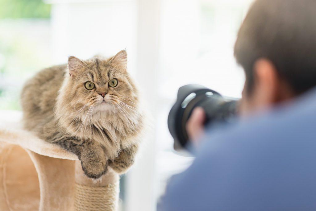 Personne qui photographie un chat