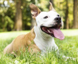 Pet Alert, Animalerte.org… Internet au secours des animaux perdus