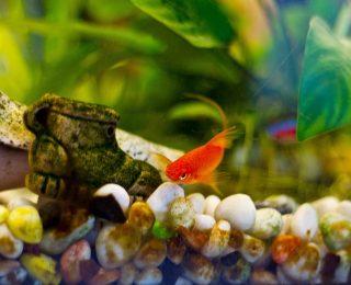 Mon poisson se frotte au décor : pourquoi ?