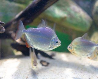 Quel sable choisir pour le sol de l'aquarium ?