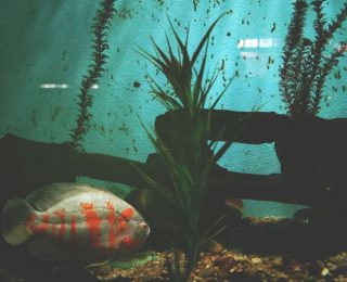 Pourquoi mon poisson reste-t-il au fond de l'aquarium ?