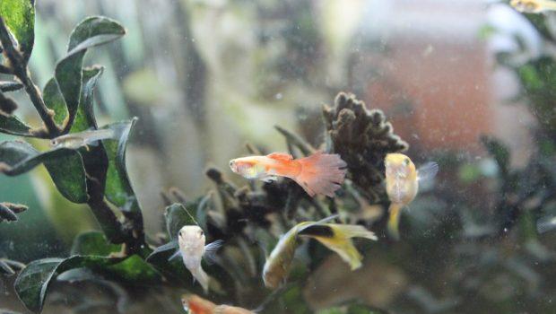Comment nourrir ses poissons d'eau douce ?