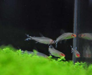 Les espèces de poissons tropicaux compatibles