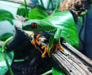 10 animaux à voir dans les forêts équatoriales