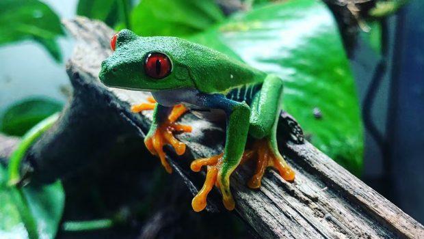 Quels animaux voir dans les forêts équatoriales ?