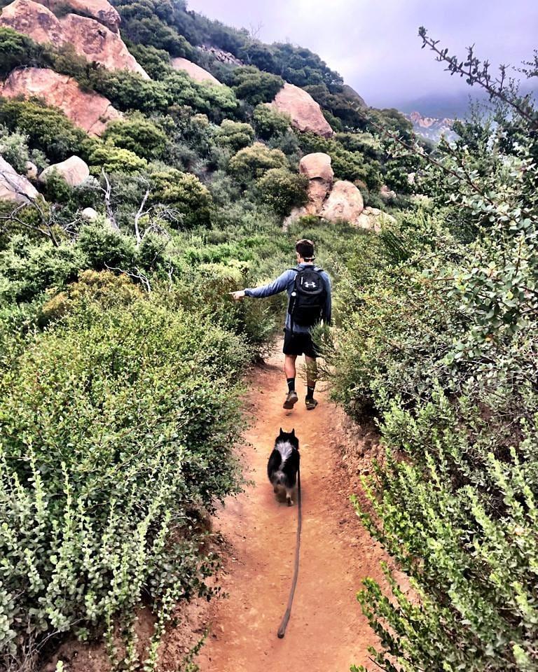 randonnées chien