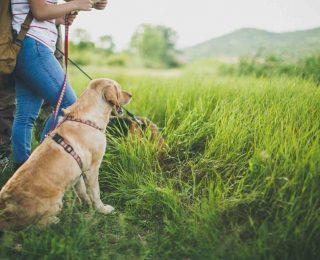 Partir en randonnée avec son chien
