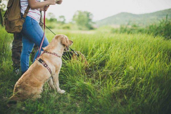 Conseils pour partir en randonnée avec son chien