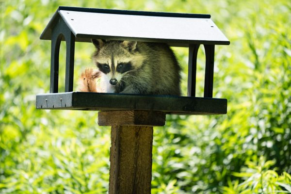Quel est l'animal le plus malin au monde ?