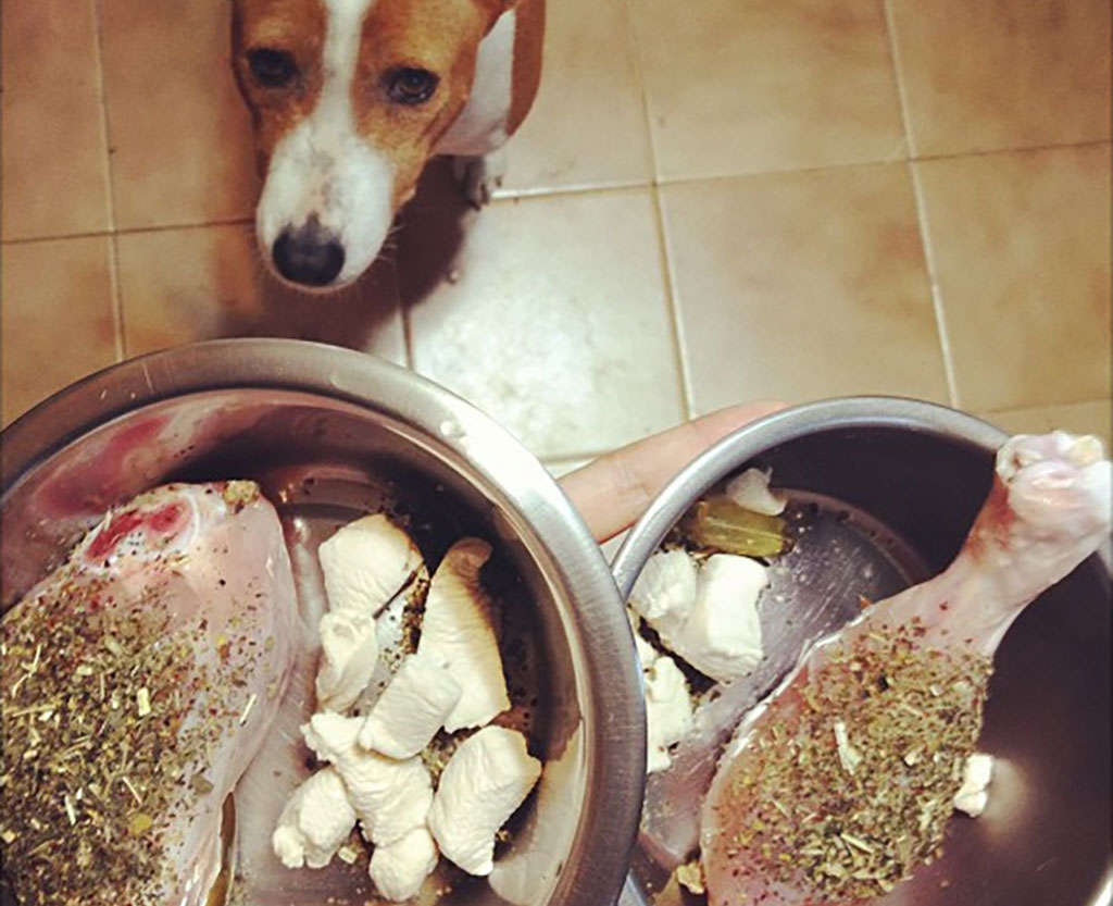 gamelle raw feeding pour chien