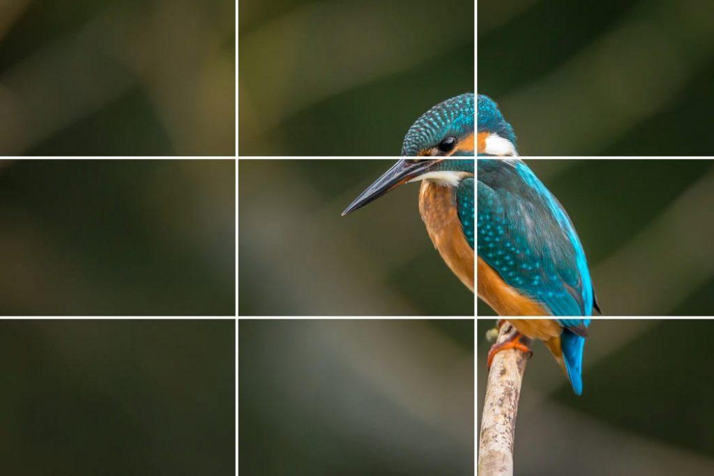 règle des tiers en photographie