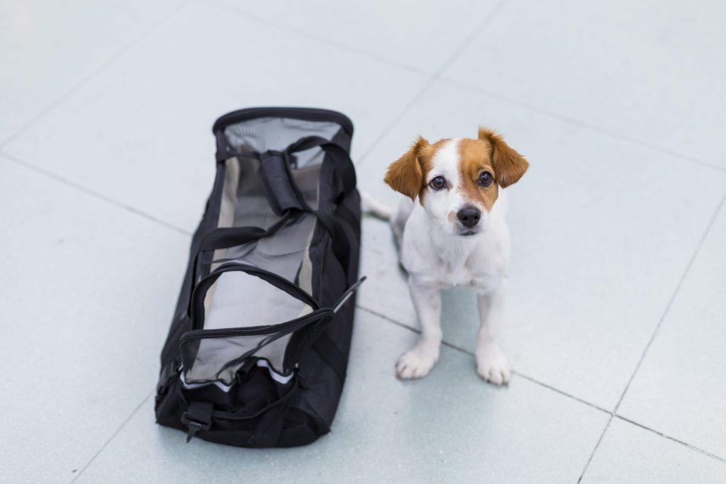 Sac cabine en tissu pour transport du chien dans l'avion