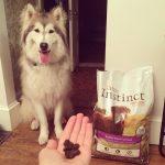 Croquettes sans céréales : quels bienfaits pour le chien ?