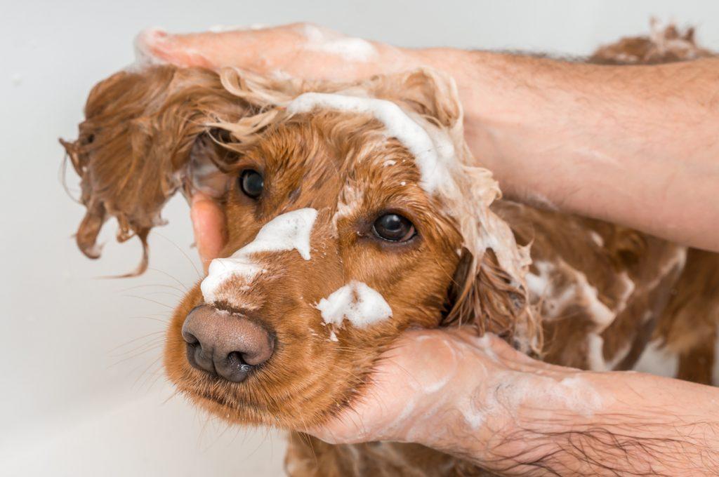 femme qui fait un shampooing à son chien